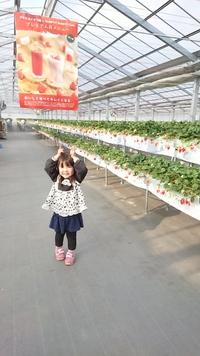 第26回イチゴ摘み採り体験(30.3.11)