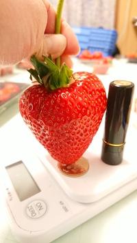 第13回イチゴ摘み採り体験(31.2.17)