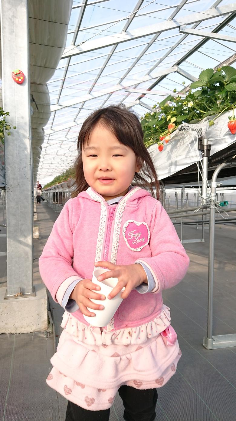 第3回イチゴ摘み採り体験(30.1.28)