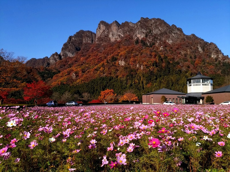 秋桜と紅葉