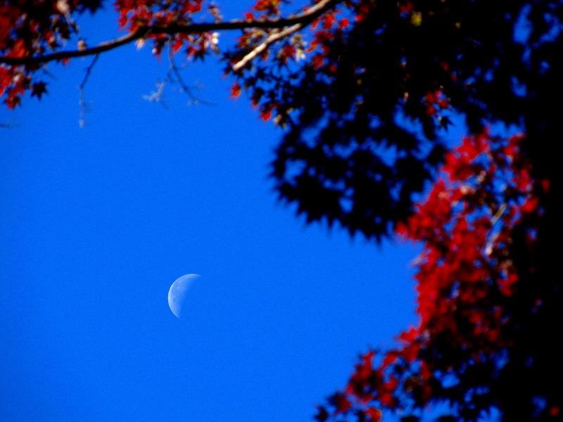 紅葉と下弦の月@少林山