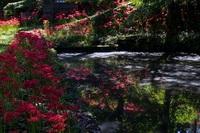 秋の人見城跡ほたる池