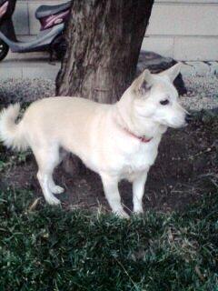 白衣観音の愛犬