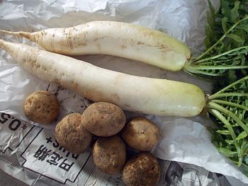 初めて作った市川さん野菜