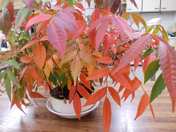 小さな森の紅葉