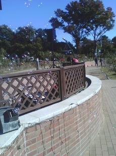 前橋バラ園 秋のバラフェスタ