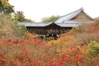 京都いい旅