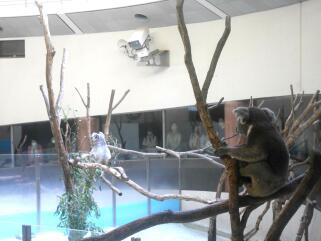 多摩動物公園散策