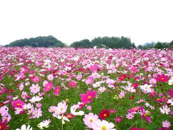 鼻高展望花の丘。。。♪