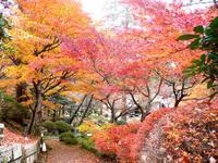 徳明園の紅葉。。。♪