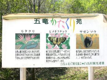 白馬&五竜かたくり苑