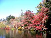⦅雲場池⦆ 散策