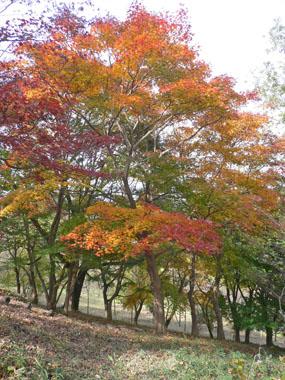 「紅葉山公園」の散策