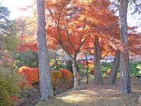 宝登山の紅葉