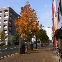 本日は定休日 秋晴れのおでかけ日和です。
