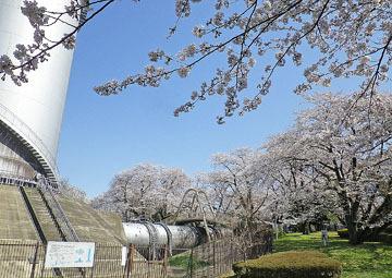 渋川市/佐久発電所の桜 ♪