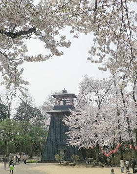 沼田公園の桜 ♪