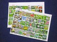 手作り「野の花図鑑」 ♪