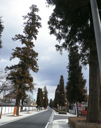 安中の風景10 - 杉並木周辺♪
