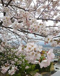 春の花めぐり♪