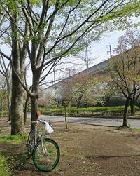 浜川運動公園 新緑さんぽ ♪