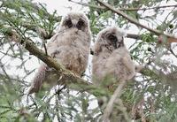 野鳥観察の写真(2) ♪