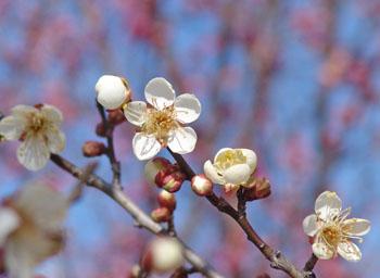 春はすぐそこ・・・♪