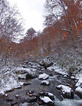 雪景色と紅葉 ♪