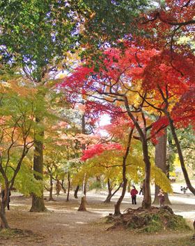 上田城跡公園☆紅葉さんぽ(2)♪