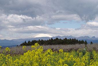 鼻高展望花の丘 の「菜の花祭り」  ♪