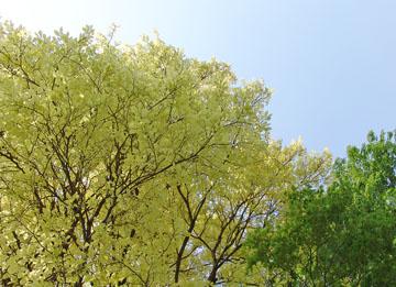 不思議な 樹・・・♪
