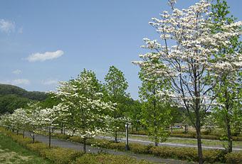 安中榛名駅は春の色 ♪