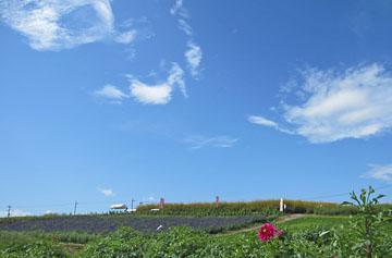 鼻高展望花の丘2010 ♪