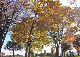 秋の散歩道 ♪