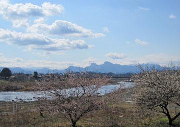 三月の雪と桜♪
