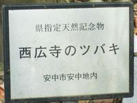 西広寺のツバキ ♪