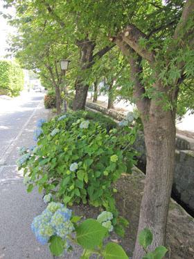 白井宿で 花散歩・・・♪