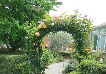 前橋/アルバート邸のバラ ♪