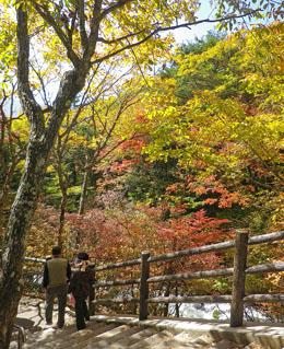日光・龍頭ノ滝の紅葉 ♪