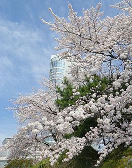 春の高崎。まち歩き ♪