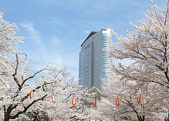 高崎公園の桜 2012 ♪