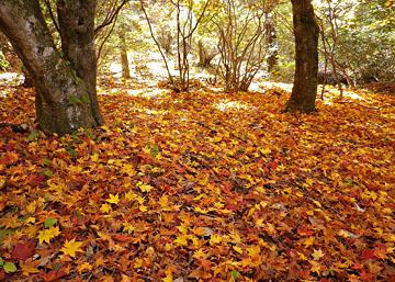 伊香保 上ノ山公園の紅葉 ♪