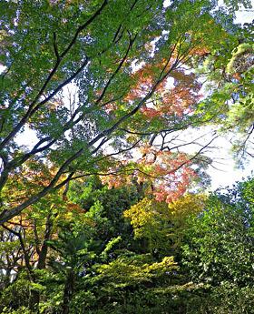 秋の観音山さんぽ ♪