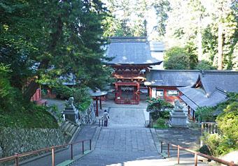 貫前神社の巨木 ♪