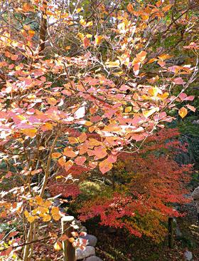 少林山の紅葉 ♪