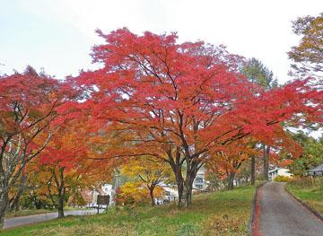榛名湖の紅葉 ♪