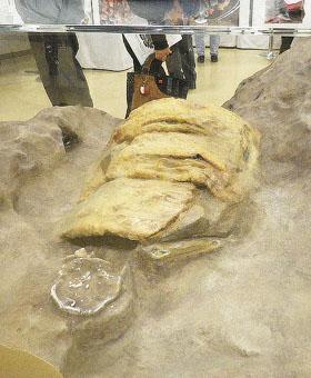 金井東裏遺跡「よろいを着た古墳人」今日だけ特別展示♪