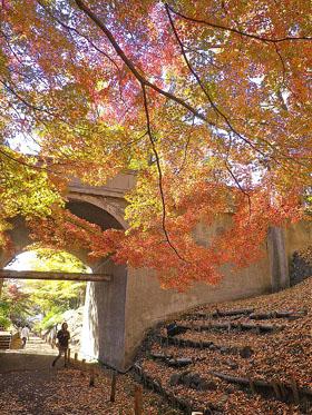 上田城けやき並木の紅葉 ♪