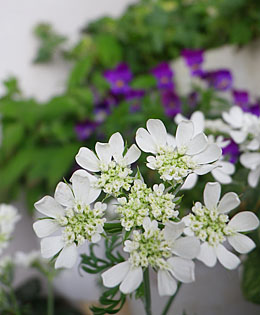 雷雲と白い花 ♪