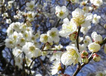 「八重の桜」雑感 ♪